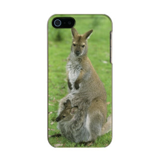 Red-necked Wallaby, Macropus rufogriseus), Metallic Phone Case For iPhone SE/5/5s
