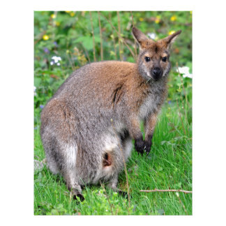 Red-necked wallaby on grass letterhead