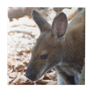 Red-necked Wallaby Tile