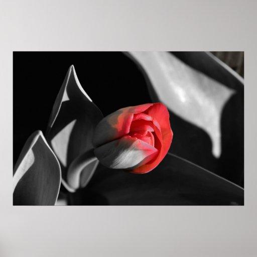 Red Newborn Tulip Print