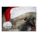 Red Nose Keeshond Christmas card