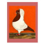 Red Nun Pigeon Postcard