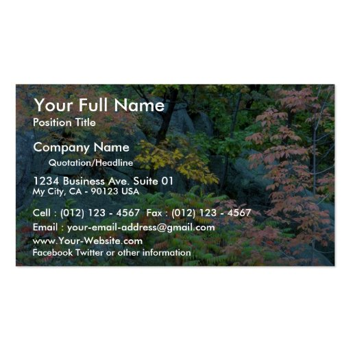 Red oak, beech and staghorn sumac, Gatineau Park, Double-Sided Standard Business Cards (Pack Of 100)