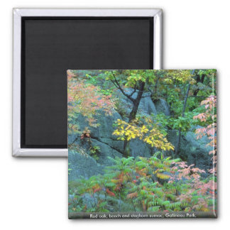 Red oak beech and staghorn sumac Gatineau Park Magnets