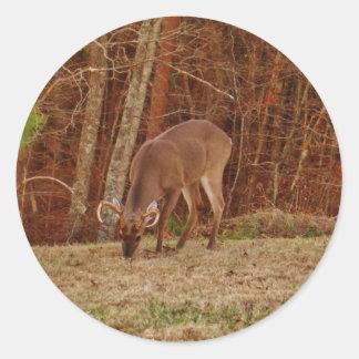 Red Oak Camouflage Stag Buck Deer Feeding Classic Round Sticker