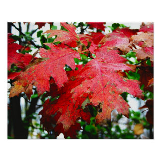 red oak leaves poster