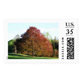 Red Oak Stamp