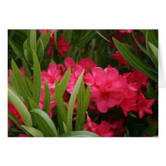 Red Oleander Card