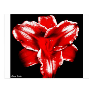 Red on Black lily Postcard