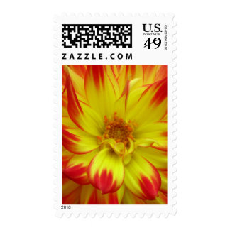 Red on Yellow Dalia Flower Postage
