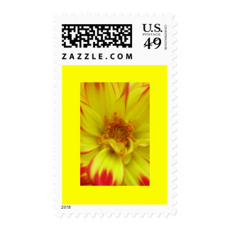 Red on Yellow Dalia Flower Stamps