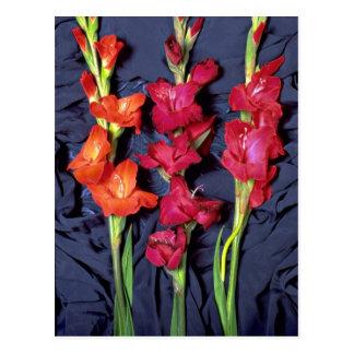 Red, orange and scarlet gladiolus postcard