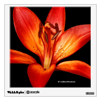 Red Orange Asiatic Lily Gran Paradiso Wall Decal