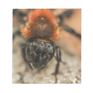 Red Orange Bee Notepad