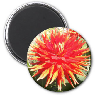 Red Orange Dahlia Flower in the Sunshine Refrigerator Magnets