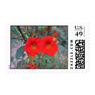 Red-Orange Flower Postage