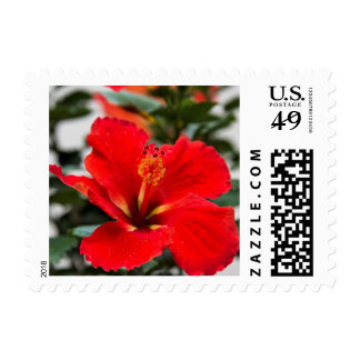 Red-orange hibiscus postage stamp