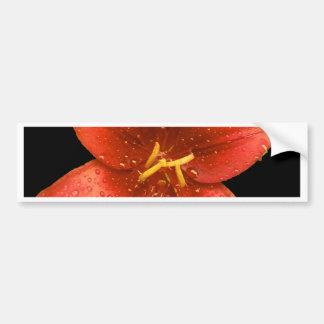 Red Orange Lily Car Bumper Sticker