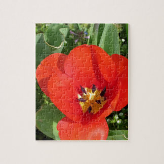 Red Orange Tulip, Floral Photography by *Mom* Jigsaw Puzzle