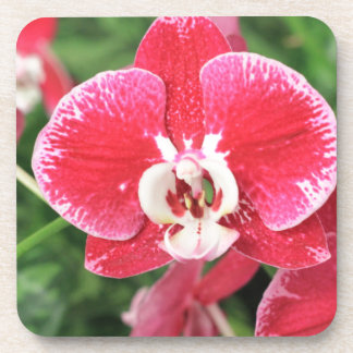 Red Orchid bloosom Beverage Coasters