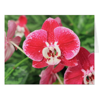 Red Orchid bloosom Card