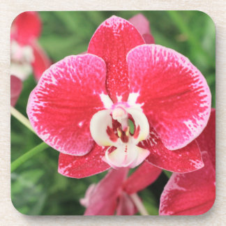 Red Orchid bloosom Coasters