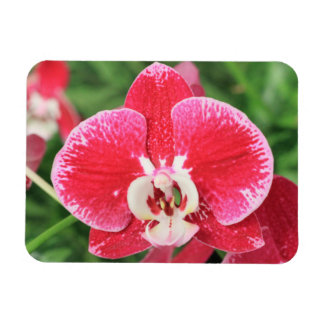 Red Orchid bloosom Flexible Magnet