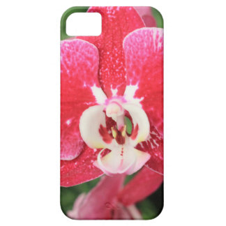 Red Orchid bloosom iPhone SE/5/5s Case