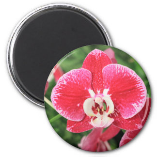 Red Orchid bloosom Magnets