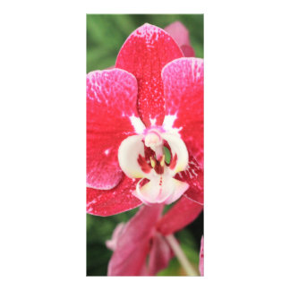 Red Orchid bloosom Rack Card