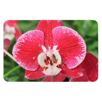 Red Orchid bloosom Rectangular Magnet