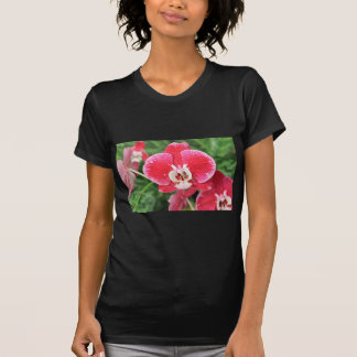 Red Orchid bloosom Shirts