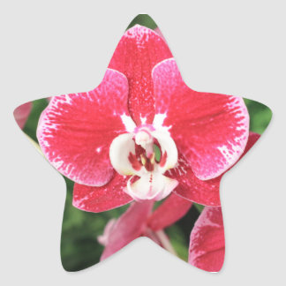 Red Orchid bloosom Star Sticker