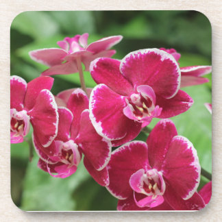 Red Orchid blossom Coasters