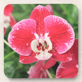 Red Orchid blossom Drink Coasters