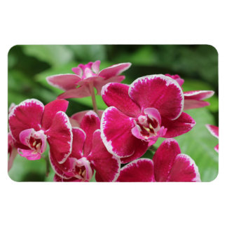 Red Orchid blossom Flexible Magnets