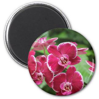 Red Orchid blossom Fridge Magnet