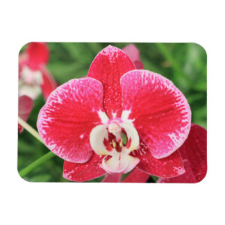 Red Orchid blossom Rectangle Magnets