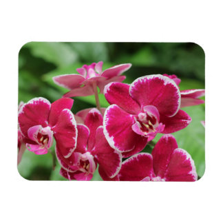 Red Orchid blossom Rectangular Magnets