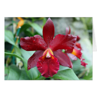 Red Orchid Card