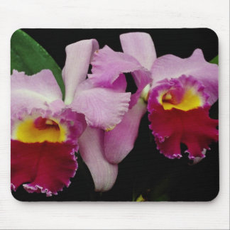 Red Orchid cattleya Irene Finney flowers Mouse Pad