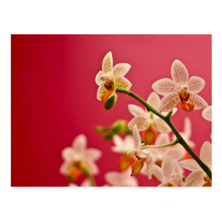 Red Orchid • Postcard