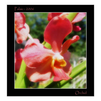 Red Orchid Poster