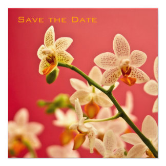 Red Orchid • Save the Date Announcement
