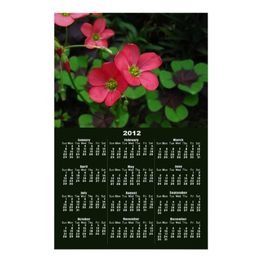 Red Oxalis Calendar ~ print~ Poster