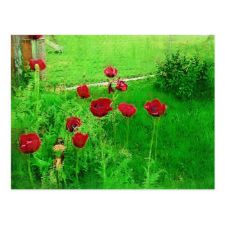 Red Painted Poppies Postcard