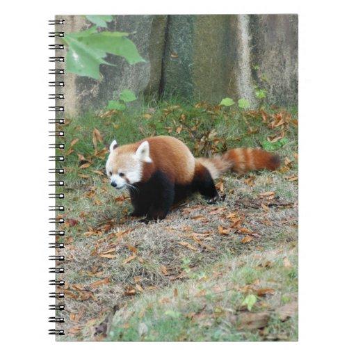 red-panda-001 libreta
