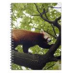 red-panda-002 libretas