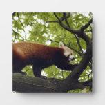 red-panda-002 placas de plastico