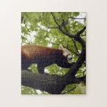 red-panda-002 puzzles con fotos